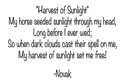 Harvest of Sunlight, poem by Kim Novak, 2021